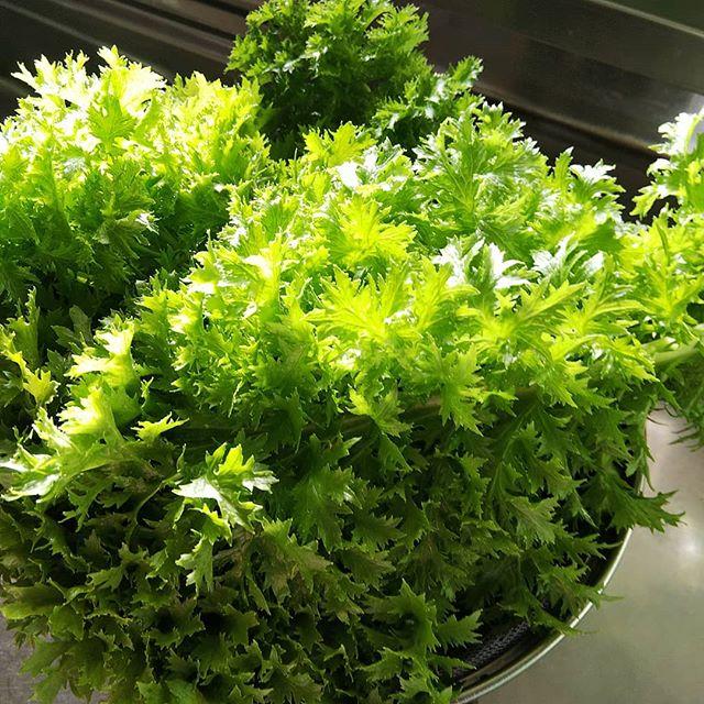 この野菜の名前は?一口食べてみましたが初めての味教えてください️ #福山神辺#野菜の名前は