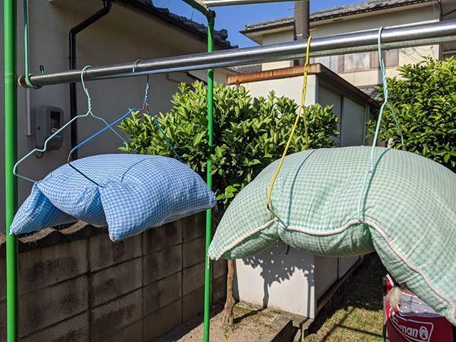 梅雨の谷間いいお天気🌞枕を洗いました今晩は太陽の匂いを嗅ぎながら眠る#福山神辺 #晴天なり #明日からまた雨だって